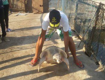 وزارة البيئة تطلق سراح سلحفاة نادرة بالبحر المتوسط